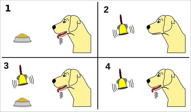 نظرية كلب بافلوف